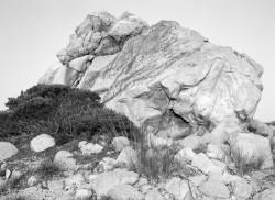 Masso e Cespuglio, spiaggia di Muchju Bianchu, Corsica, Francia INFO