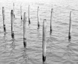 Pali di Ormeggio, Isola della Giudecca, Venezia, Italia INFO